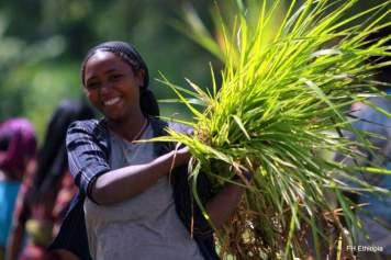 women agriculture ethiopia